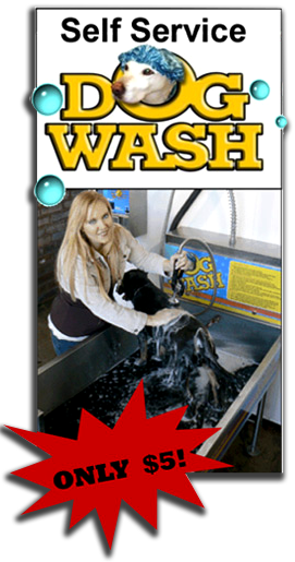 Self service dog wash auto spa car washes self service dog wash dog wash solutioingenieria Choice Image